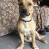 Meet Rory, Blue Ribbon News Pet of the Week