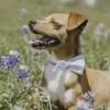 Meet Mr. Beans, Blue Ribbon News Pet of the Week