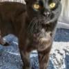 Meet Spartacus, Blue Ribbon News Pet of the Week
