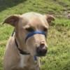 Meet Miles, Blue Ribbon News Pet of the Week
