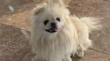 Meet Garbanzo, Blue Ribbon News Pet of the Week