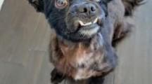 Meet Curly Moe, Blue Ribbon News Pet of the Week