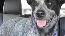 Meet Shasta, Blue Ribbon News Pet of the Week