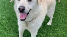 Meet Jameson, Blue Ribbon News Pet of the Week