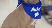 Meet Taya, Blue Ribbon News Pet of the Week