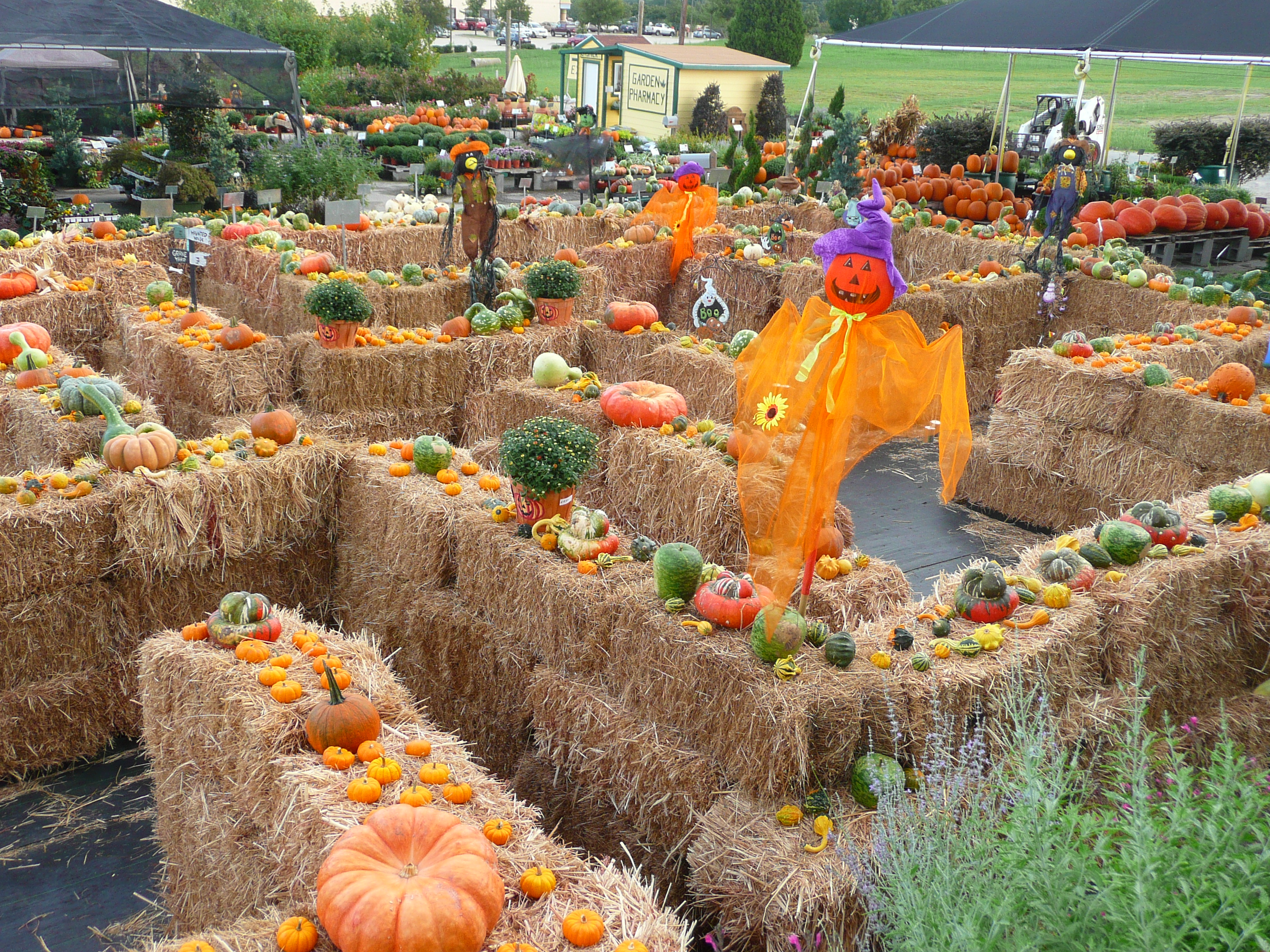 Fall festival to feature hayride maze petting zoo blue for Festival decoration ideas