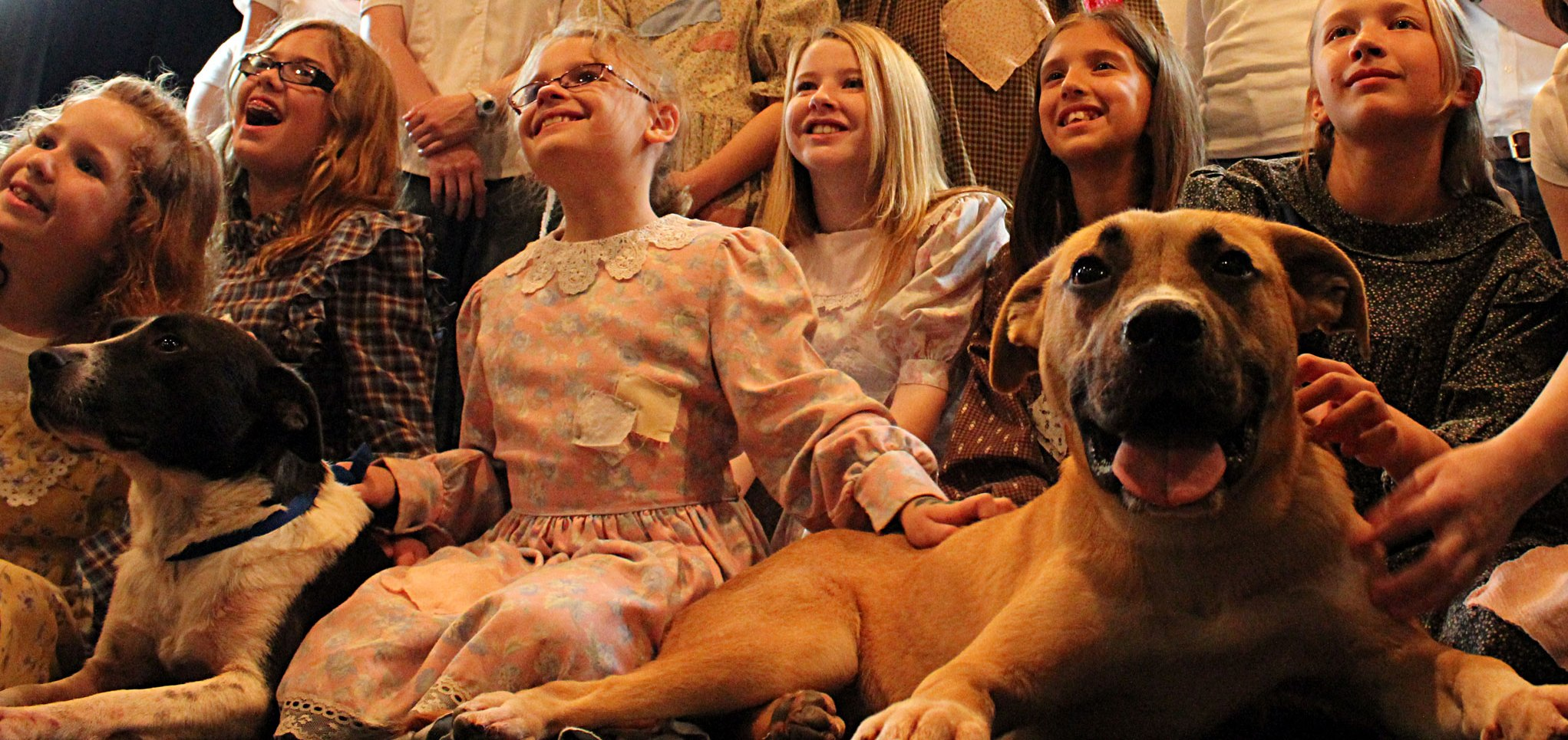 Adoptable shelter pets join cast of 'Annie'
