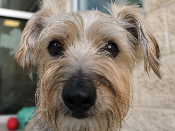 Meet Tucker, Blue Ribbon News Pet of the Week