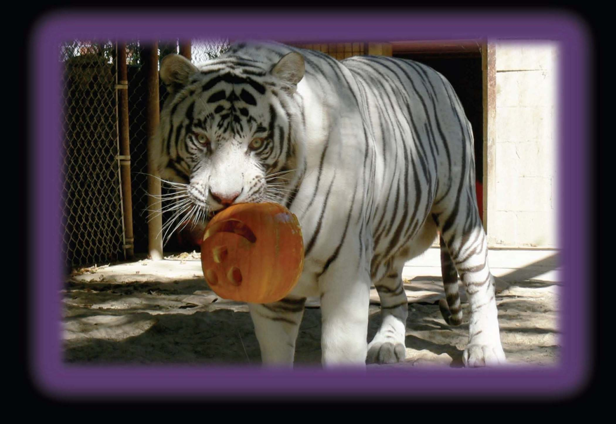 Join In-Sync's big cats for a Pumpkin Bash