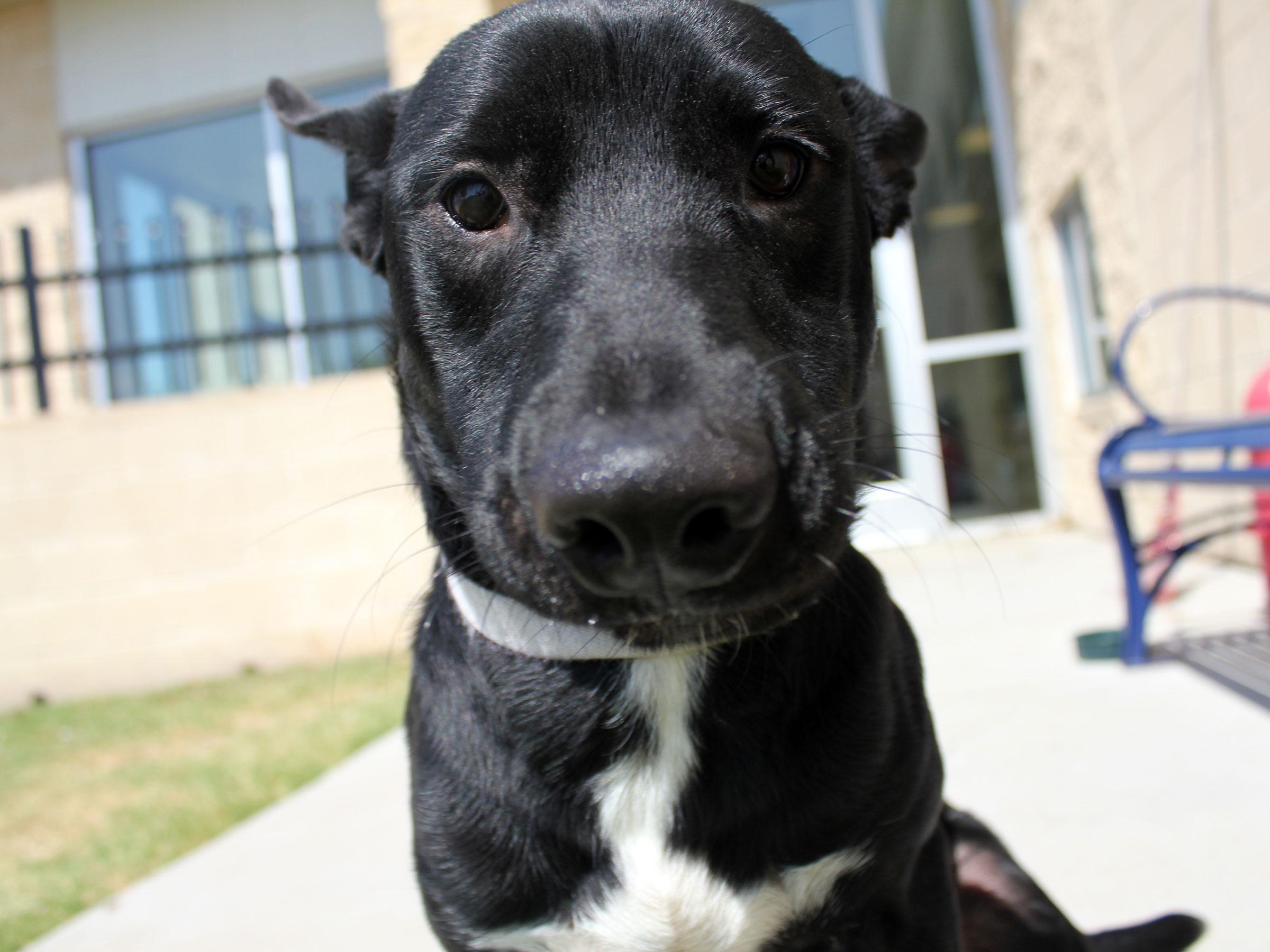 Meet Nash, Blue Ribbon News Pet of the Week