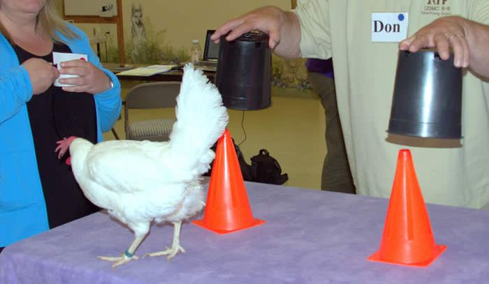 Chicken Camp: Poultry in Motion can help you train your dog
