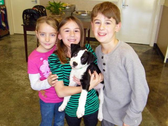 ADOPTED! Faye, Blue Ribbon News Pet of the Week