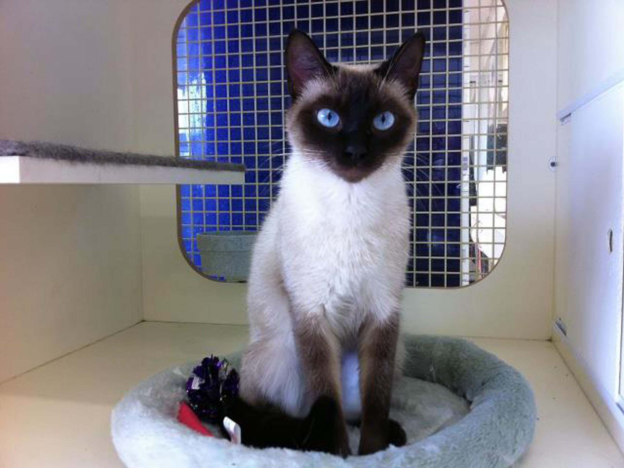 Blue Ribbon News Pet of the Week, ADOPTED!