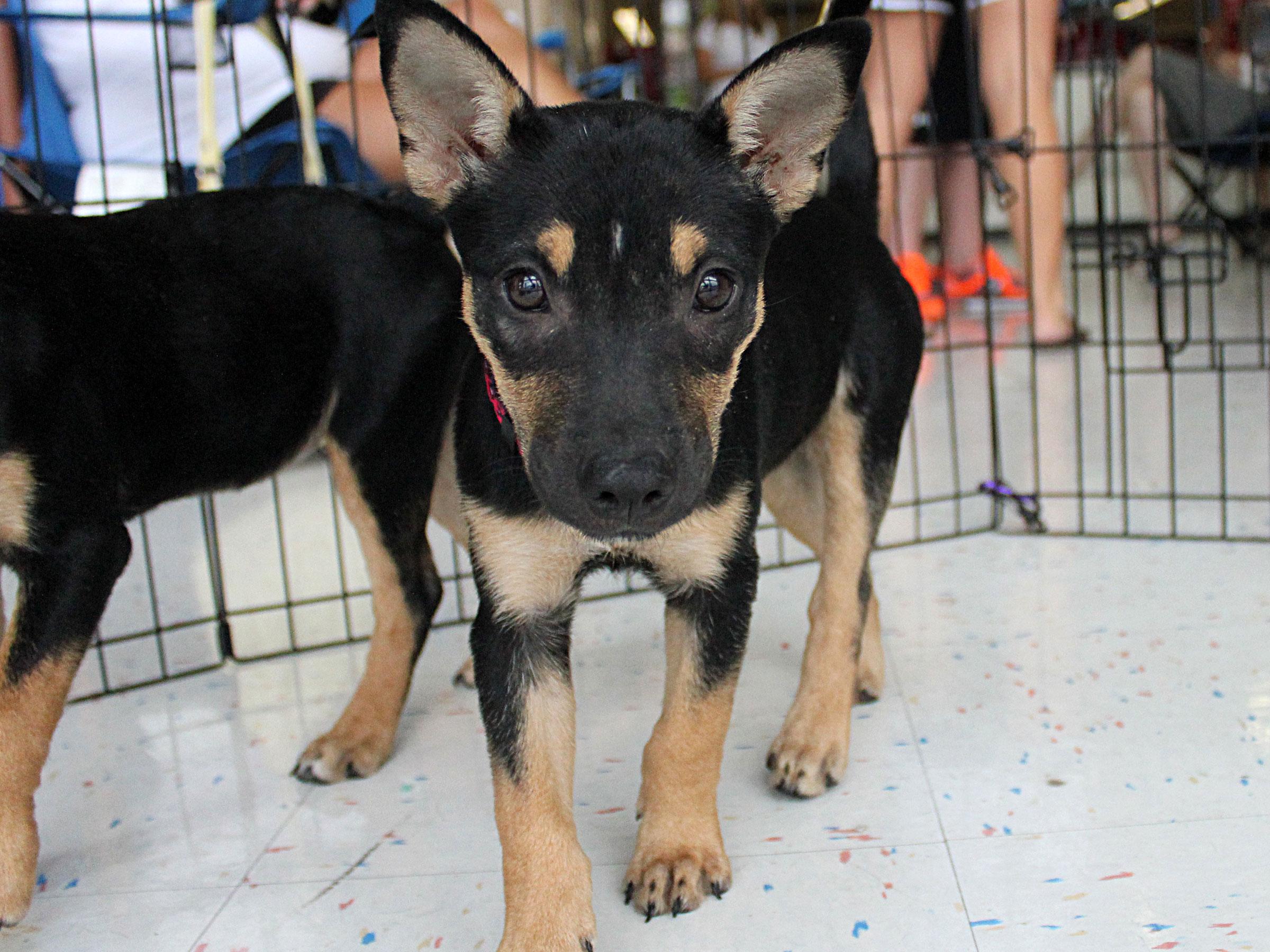 Meet Bashful, Blue Ribbon News Pet of the Week