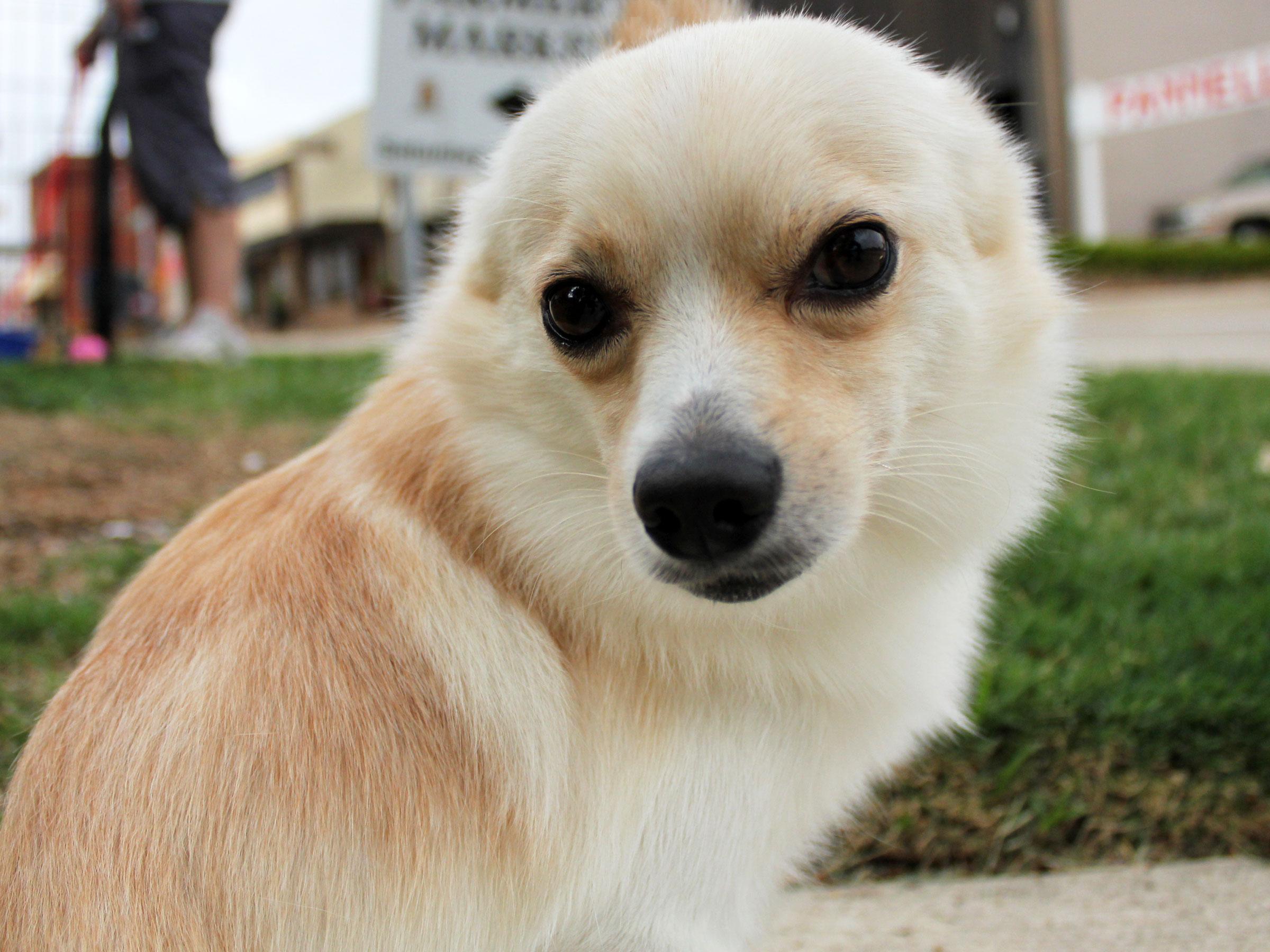 Meet Desi, Blue Ribbon News Pet of the Week
