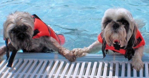 Doggie Dive-In welcomes pets to pool