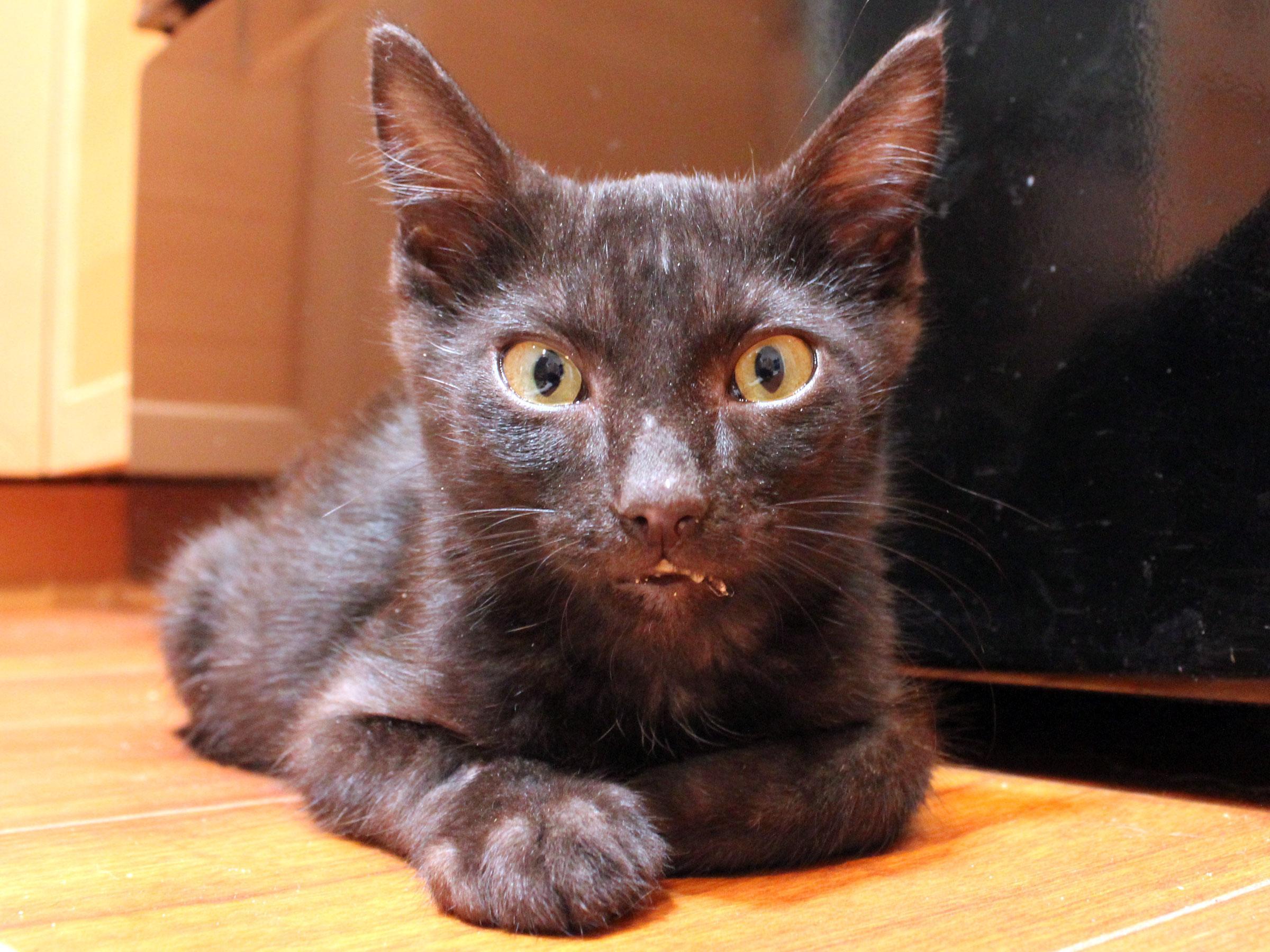 Meet Jinx, Blue Ribbon News Pet of the Week