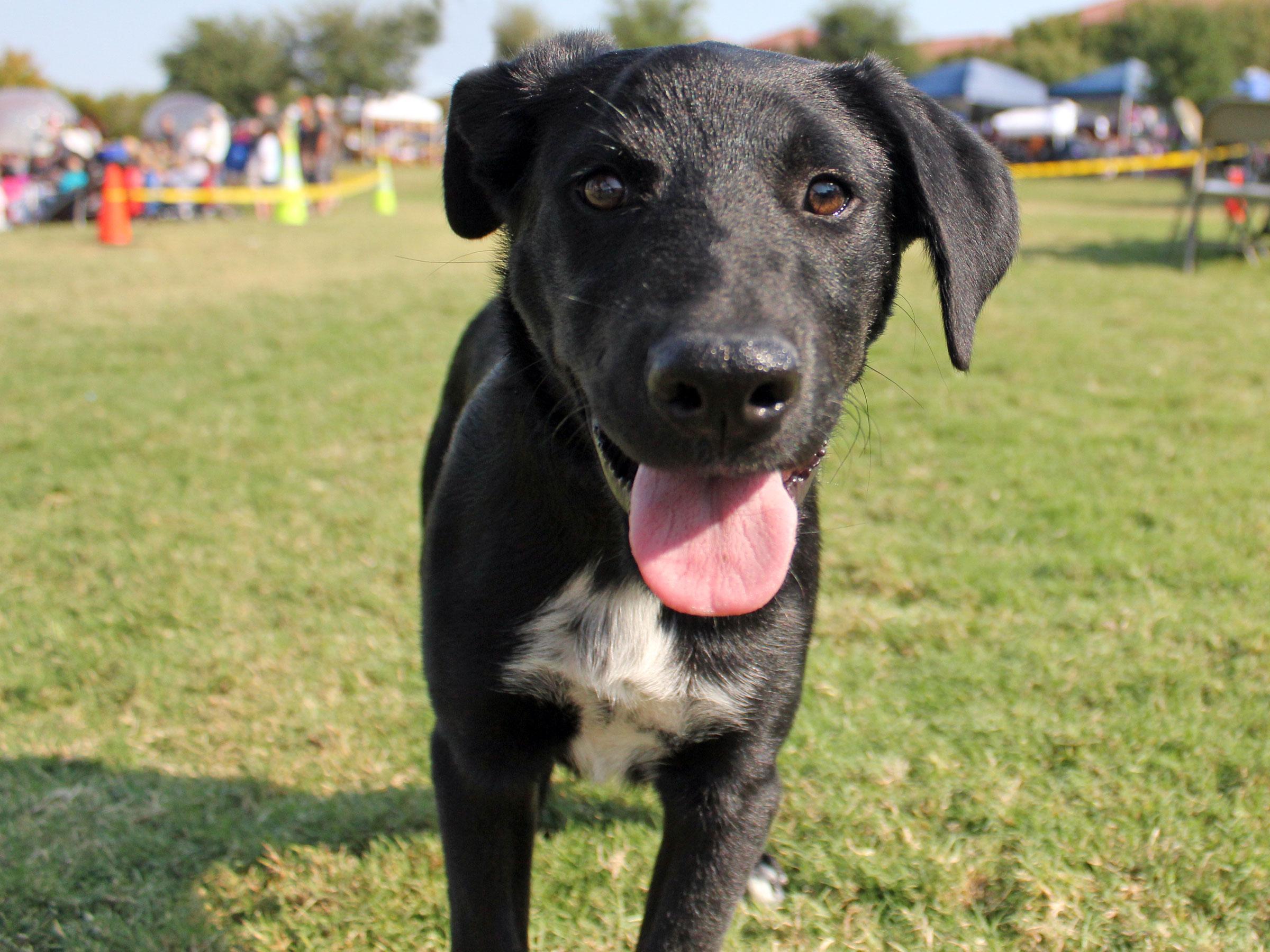 Meet Reno, Blue Ribbon News Pet of the Week