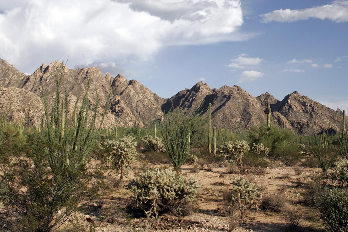 autumn desert 2