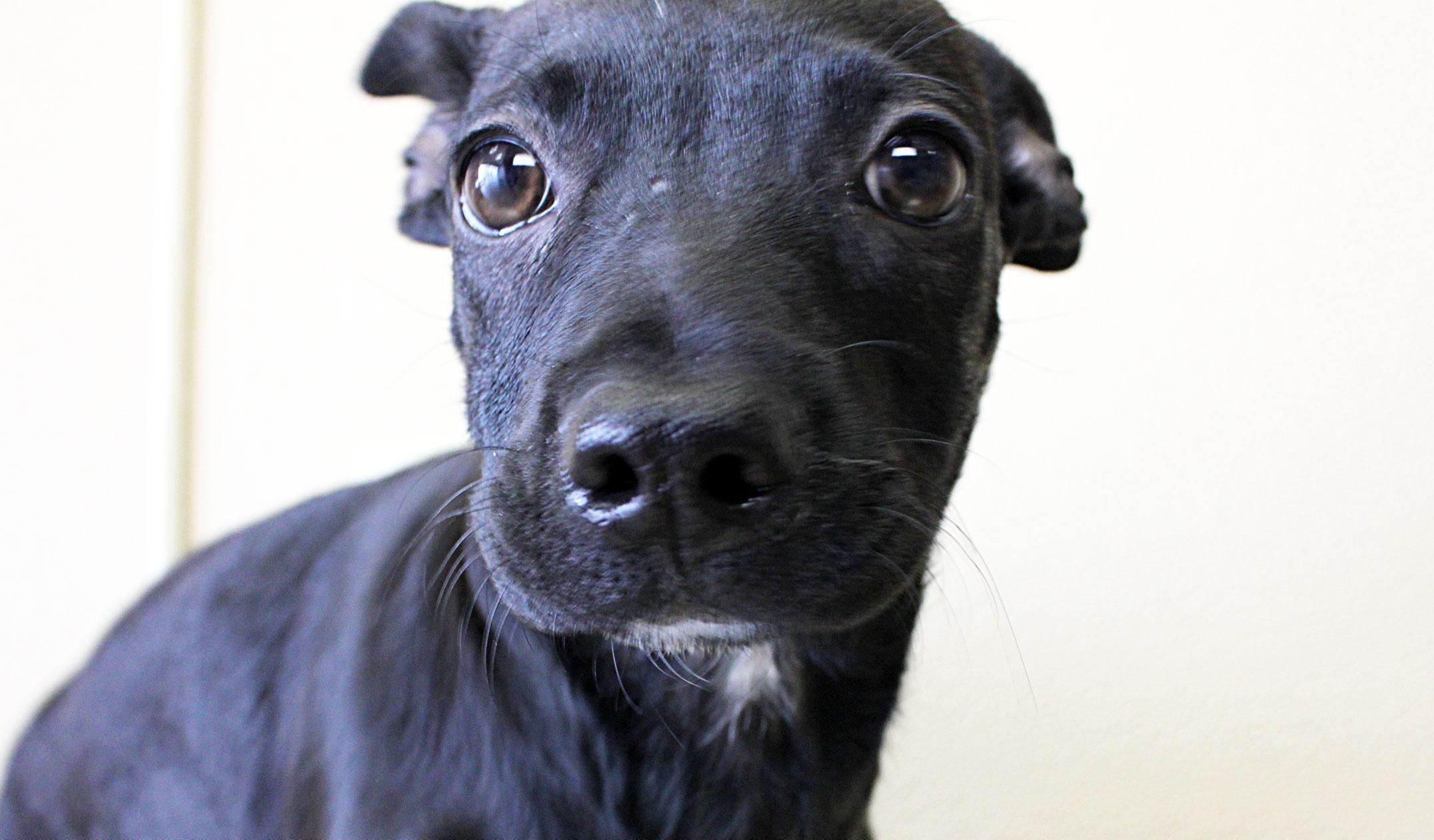 Meet Wilma, Blue Ribbon News Pet of the Week