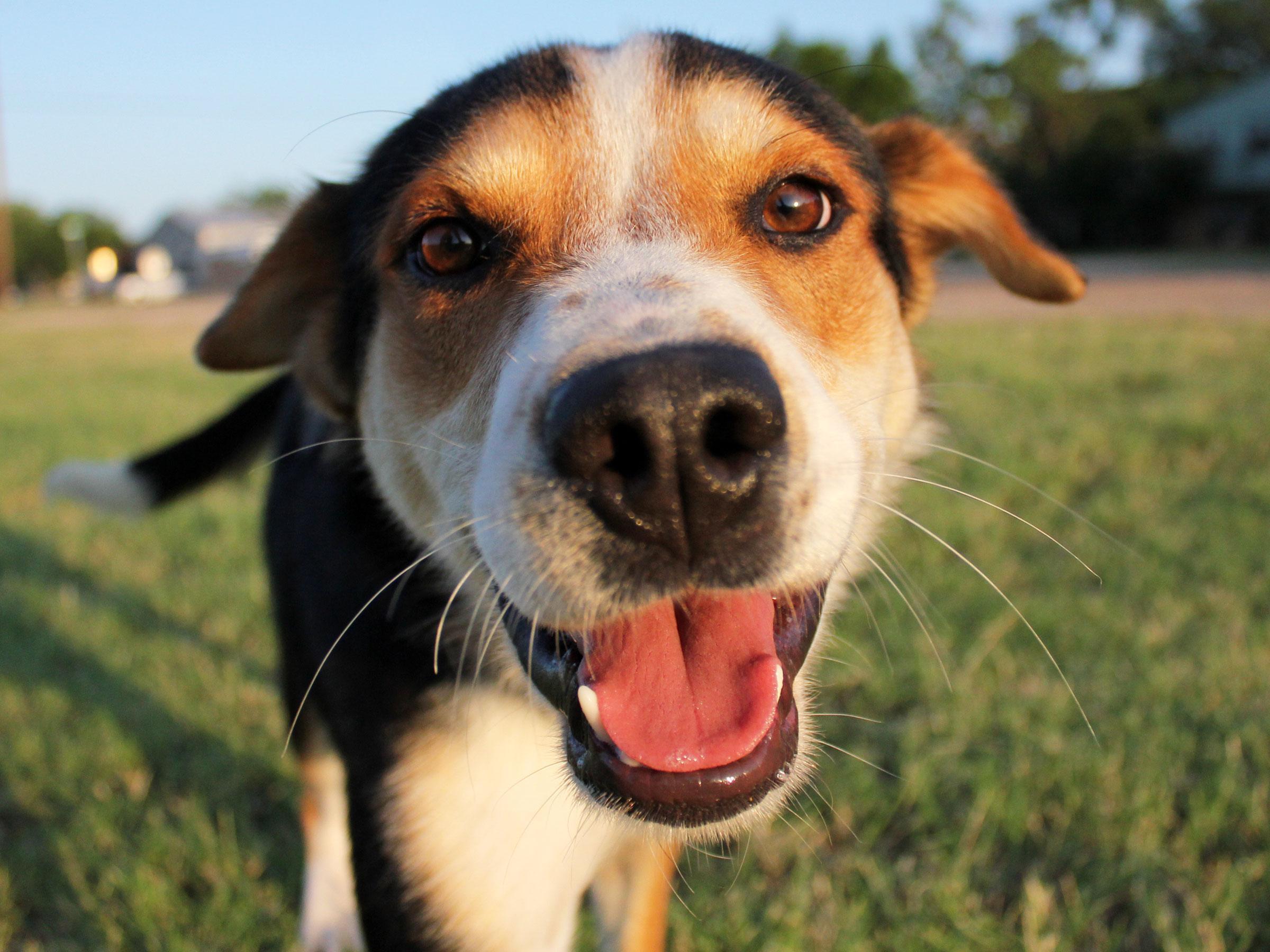 Meet Scout, Blue Ribbon News Pet of the Week