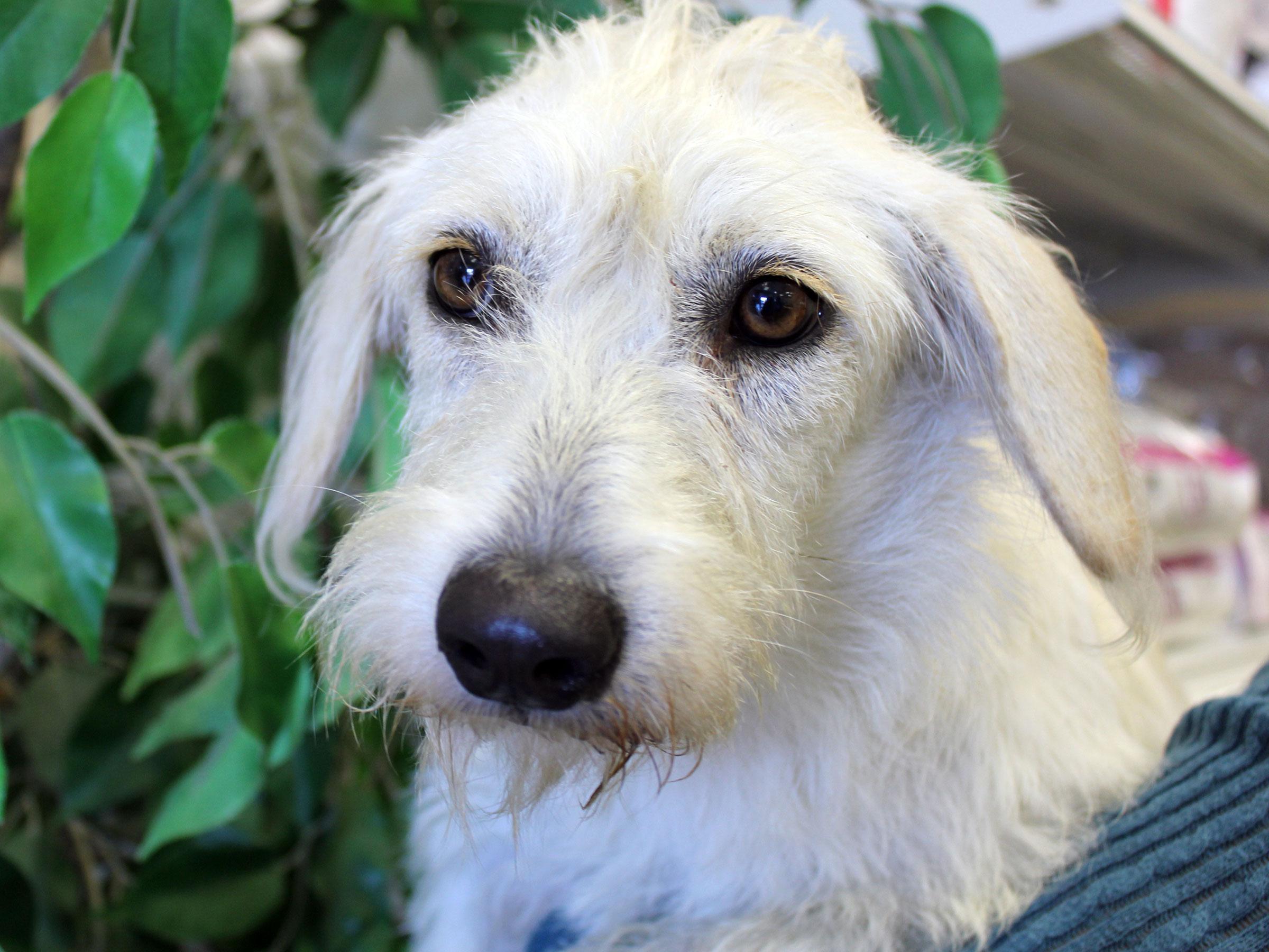 Meet Rose, Blue Ribbon News Pet of the Week