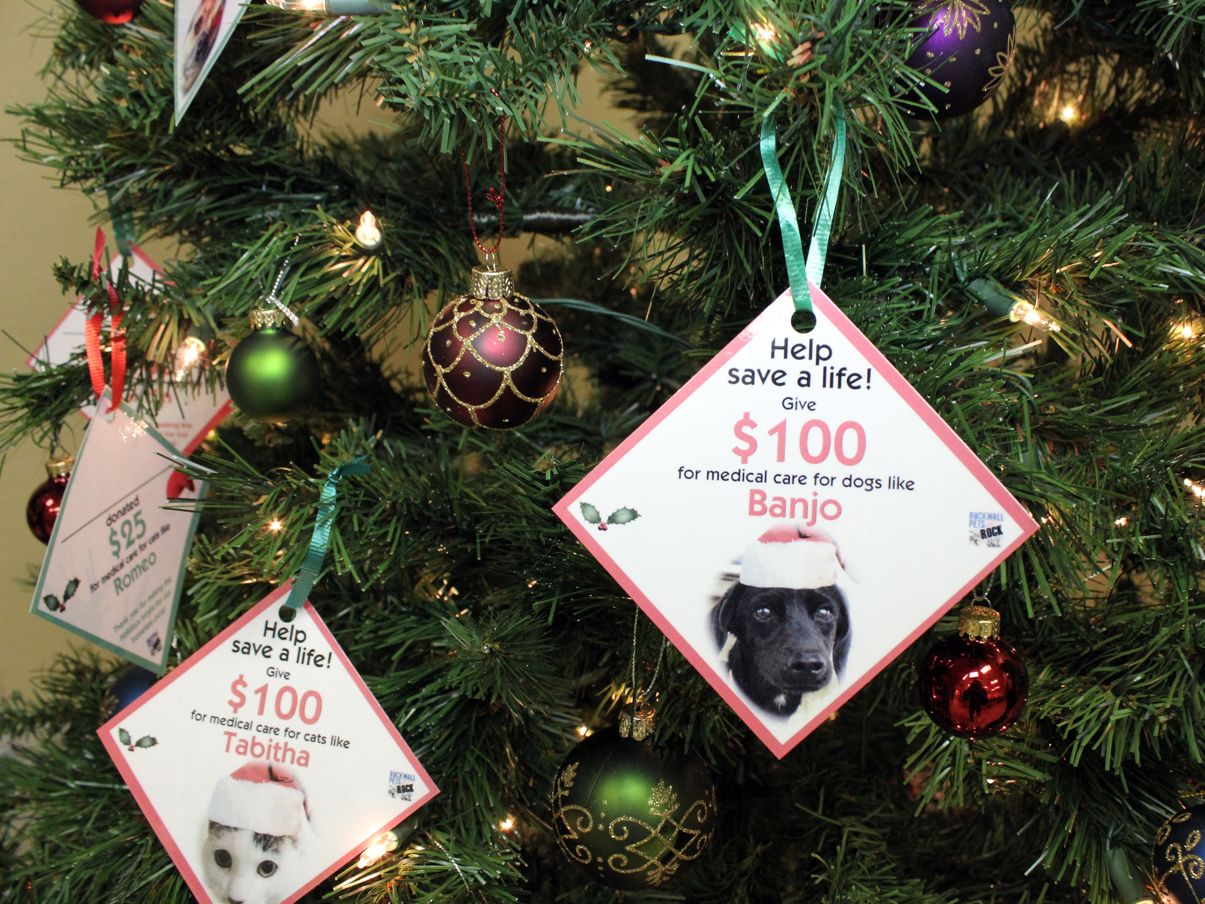 Angel Tree benefits medical care for pets
