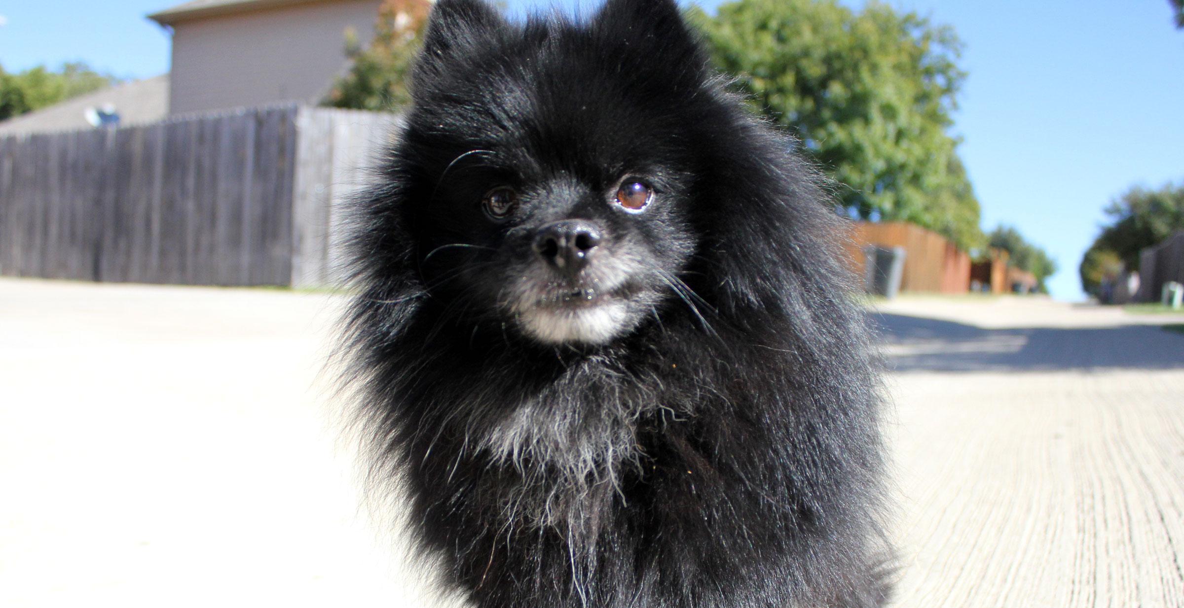 Meet Griffin, Blue Ribbon News Pet of the Week