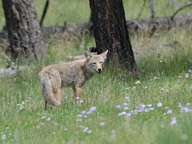 Springtime brings wildlife foraging for food