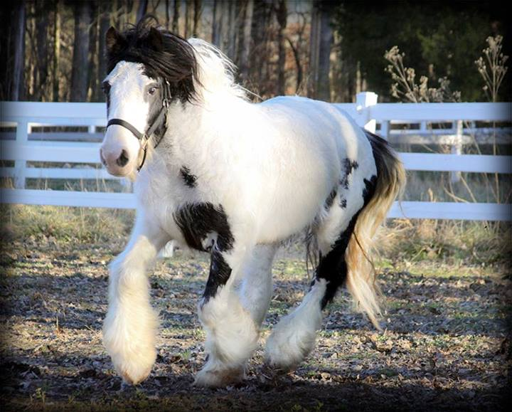 Equest wins contest, welcomes new therapy horse