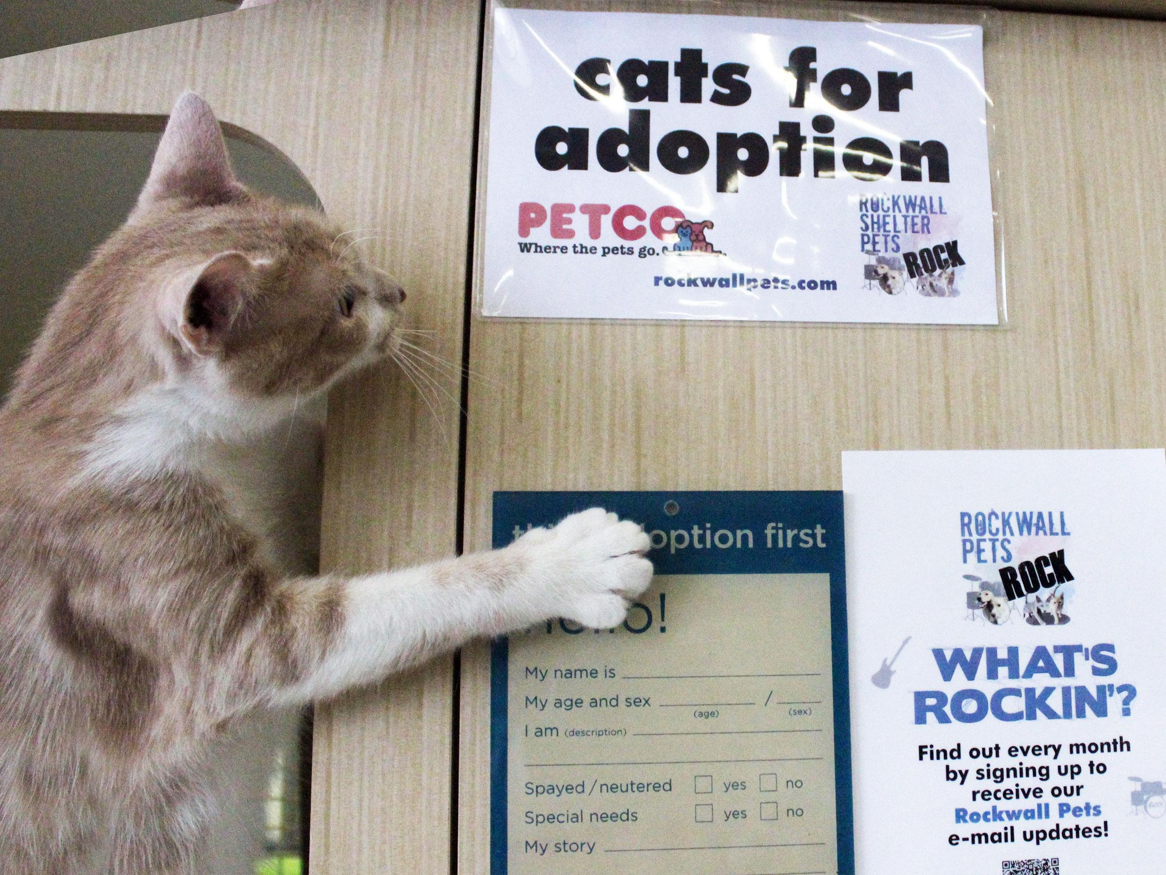 Adoption events at Rockwall Petco enter fourth year