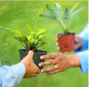 Fall Plant & Seed Swap Nov 2