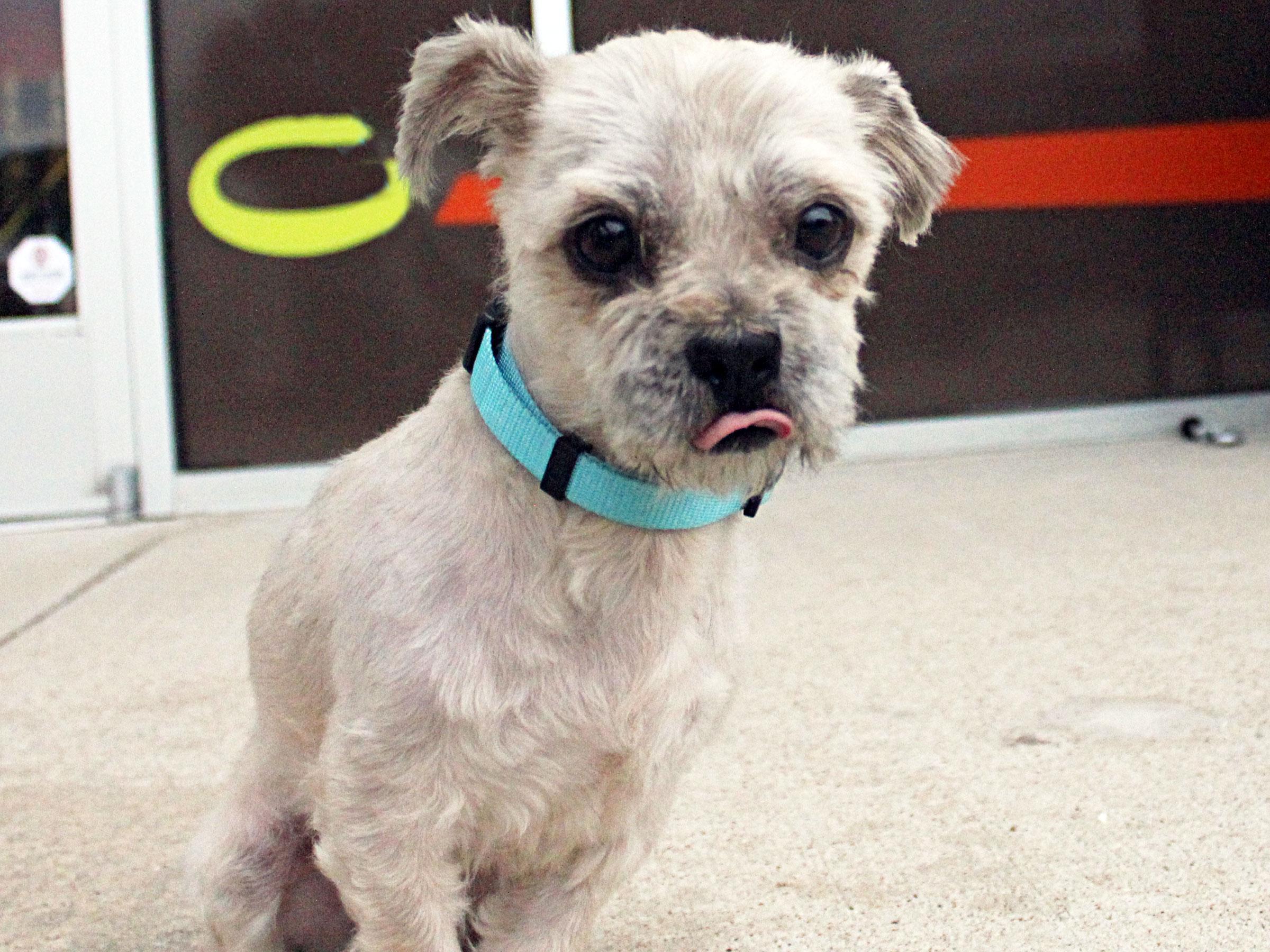 Meet Amos, Blue Ribbon News Pet of the Week
