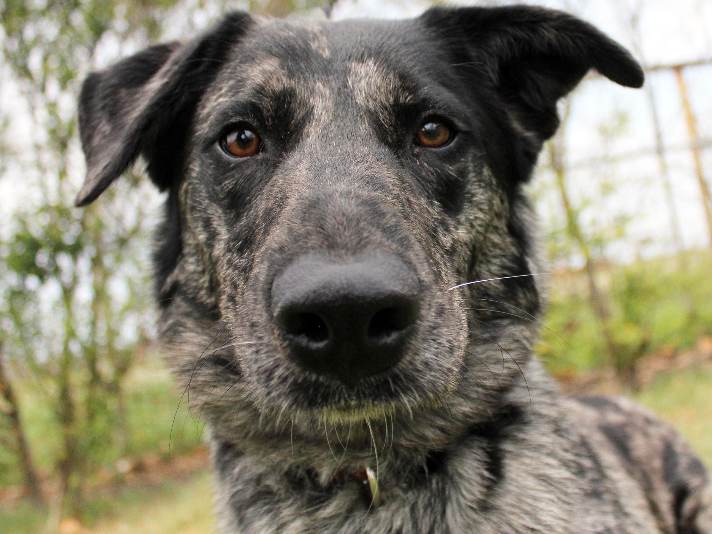 Meet Pepper, Blue Ribbon News Pet of the Week