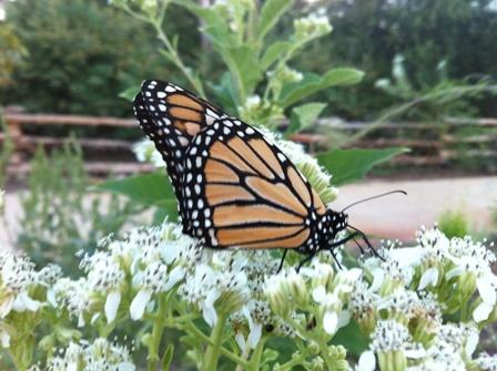 Secret garden serves as haven for butterflies, birds