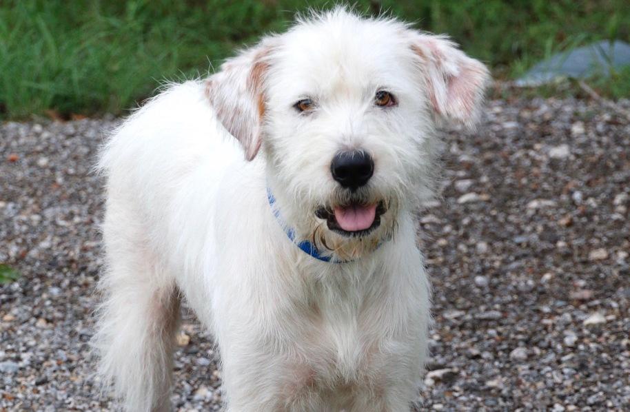 Meet Frankie, Blue Ribbon News Pet of the Week
