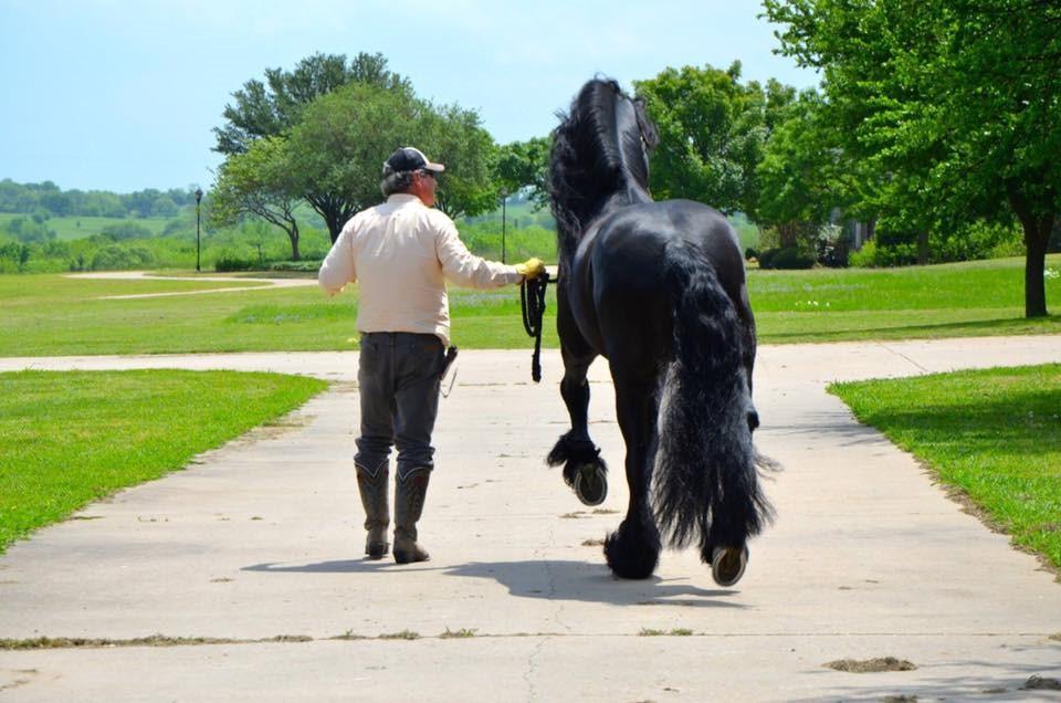 Black Star Sport Horses announces Spring 2017 events