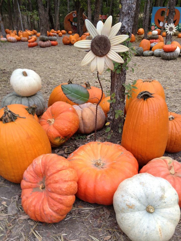 Pumpkin Patch Season at the Blase Family Farm