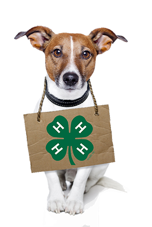 Rockwall County 4-H to host Dog Project Class Jan. 9
