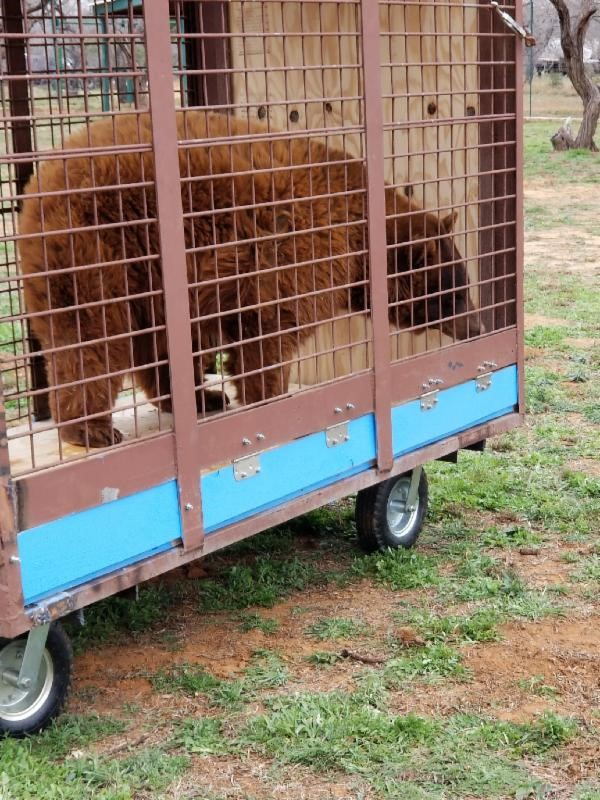 White tigers and bears rescued in seizure operation