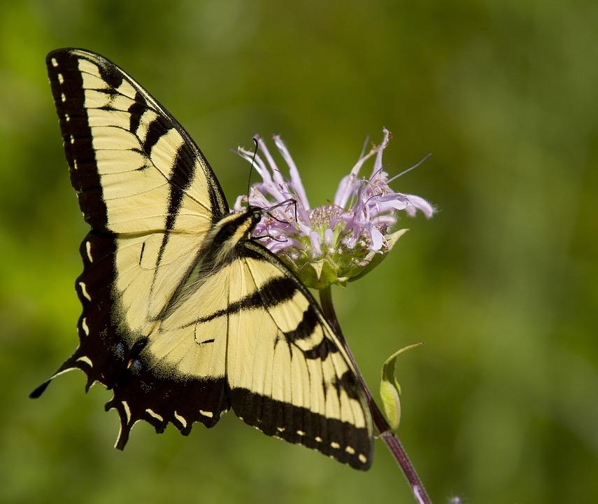 Brigade helps butterfly awareness take flight in Rockwall