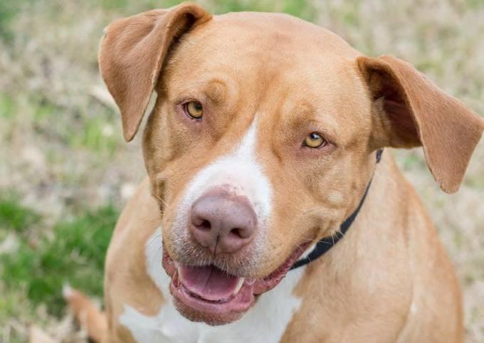 Meet Jada, Blue Ribbon News Pet of the Week