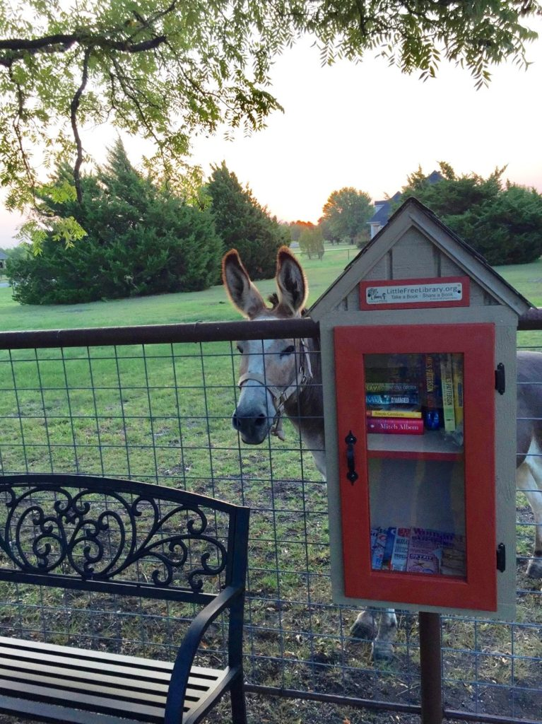 The Little Free Library in Rockwall