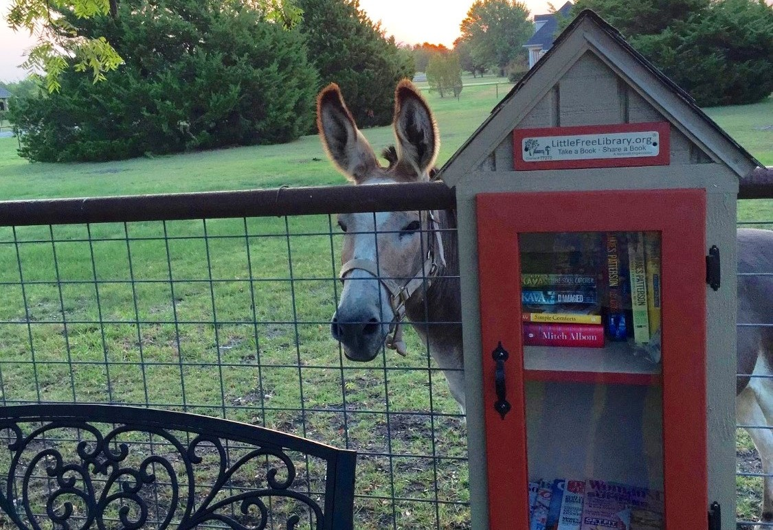 Little Free Library in Rockwall offers more than good reads