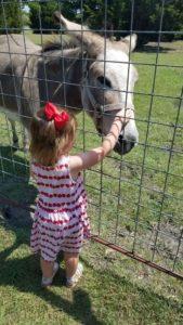Jenny the Donkey