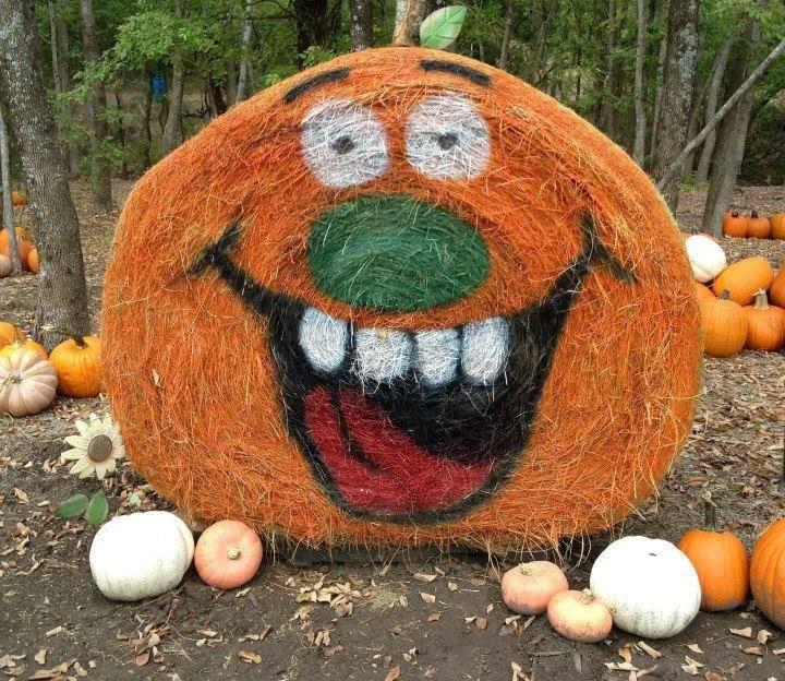 Orange you happy it's Pumpkin Patch time?