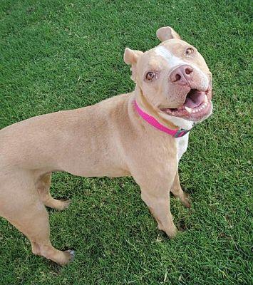 Meet Tessa, Blue Ribbon News Pet of the Week