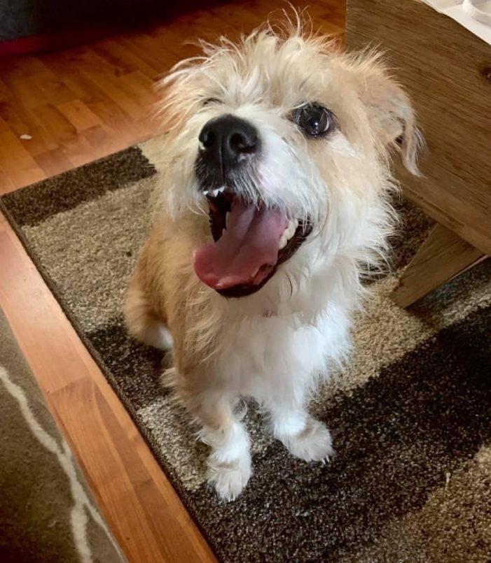 Meet Higgins, Blue Ribbon News Pet of the Week