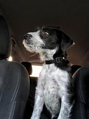 Meet Winkin, Blue Ribbon News Pet of the Week