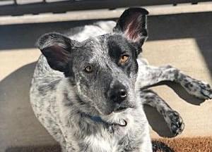 Meet Brooks, Blue Ribbon News Pet of the Week